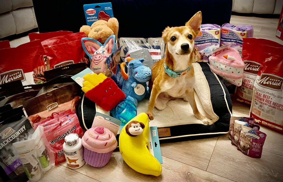 dog with pet products