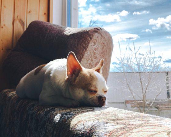 dog sunbathing on window sill