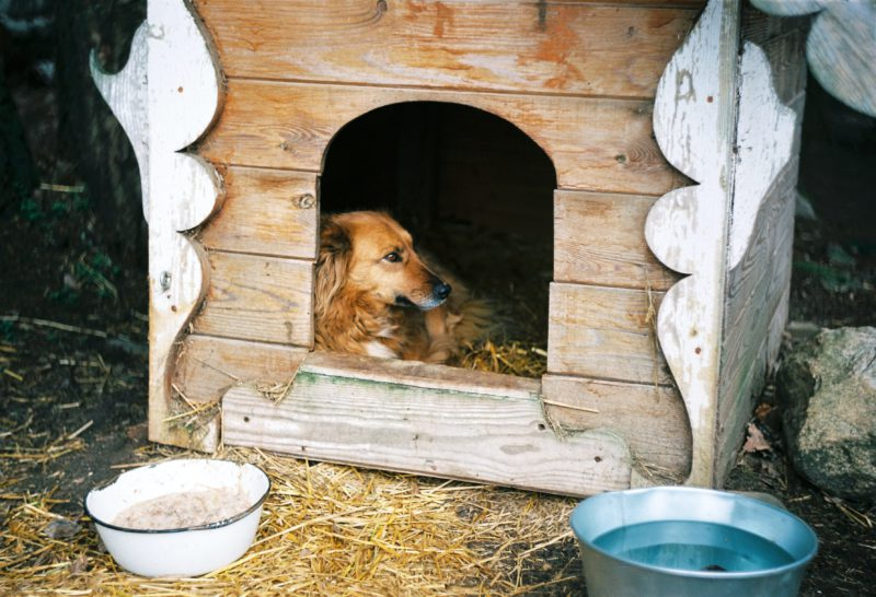 dog in wooden house