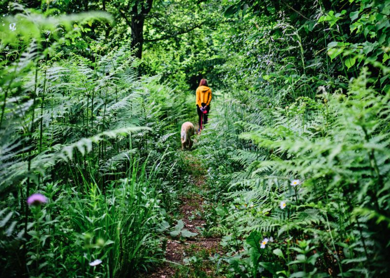 woman walking her dog in lush forest