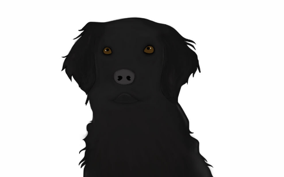 Illustration of dog who inspired PAWS of Hawaii