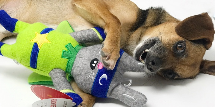 beagle playing with plush toy