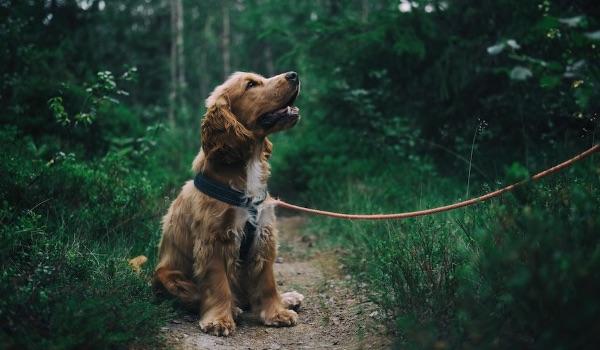 soft dog on leash