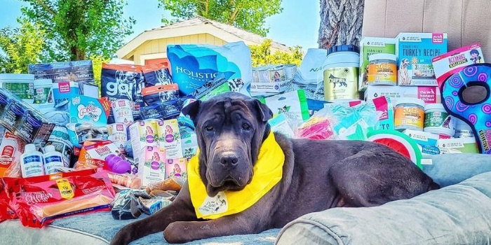 rescue dog with pet products