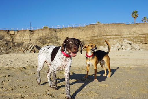 beagle and brother on the beach