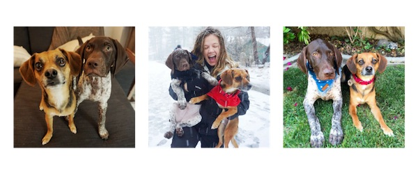 family photos with dogs