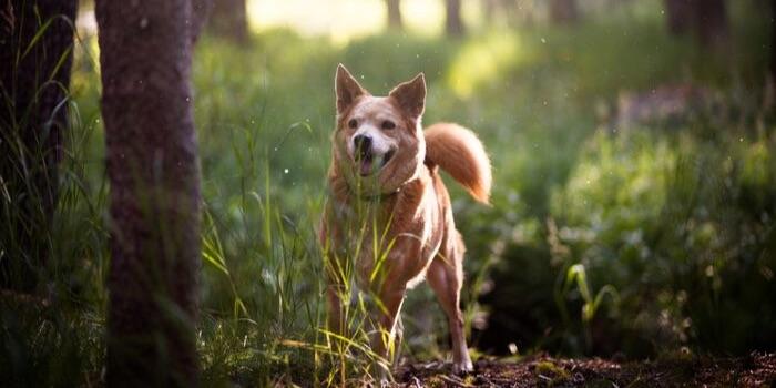 dog in a grassy wood
