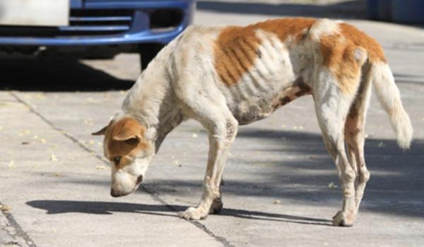 skinny dog on street