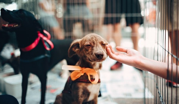 brown puppy with orange bow