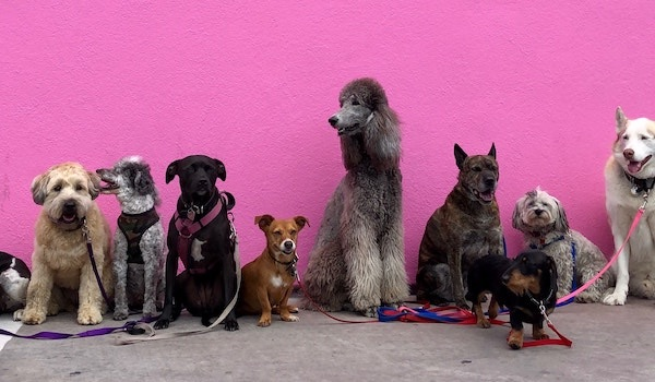 line up of dogs against contrasting wall