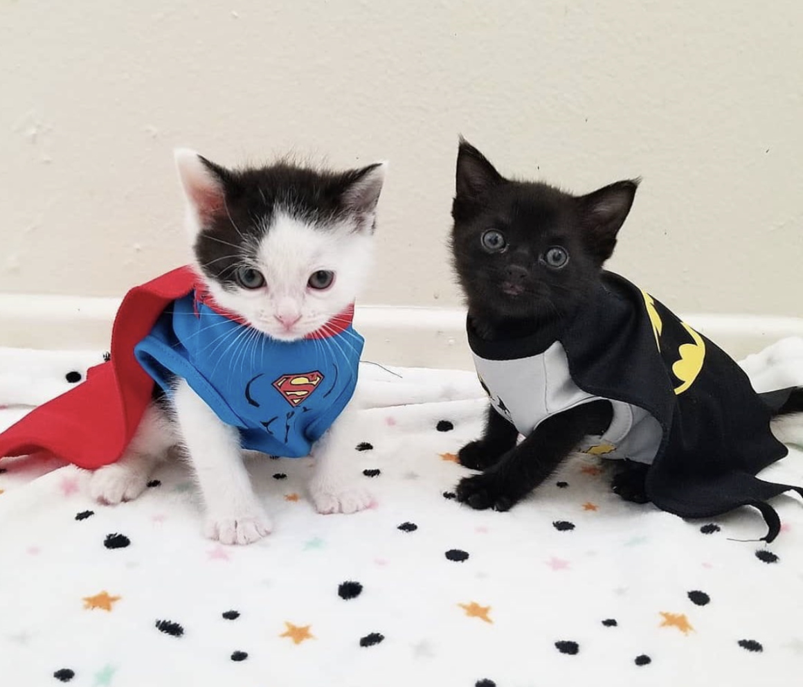 two kittens dressed as superheros