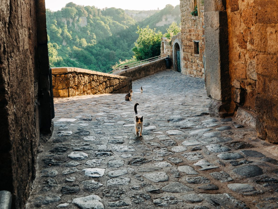 cats on cobblestone streets