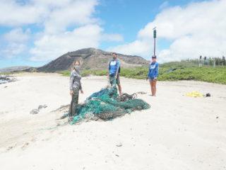 hawaii marine animal response with fishing net on beach