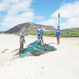 hawaii marine animal response with fishing net on beach