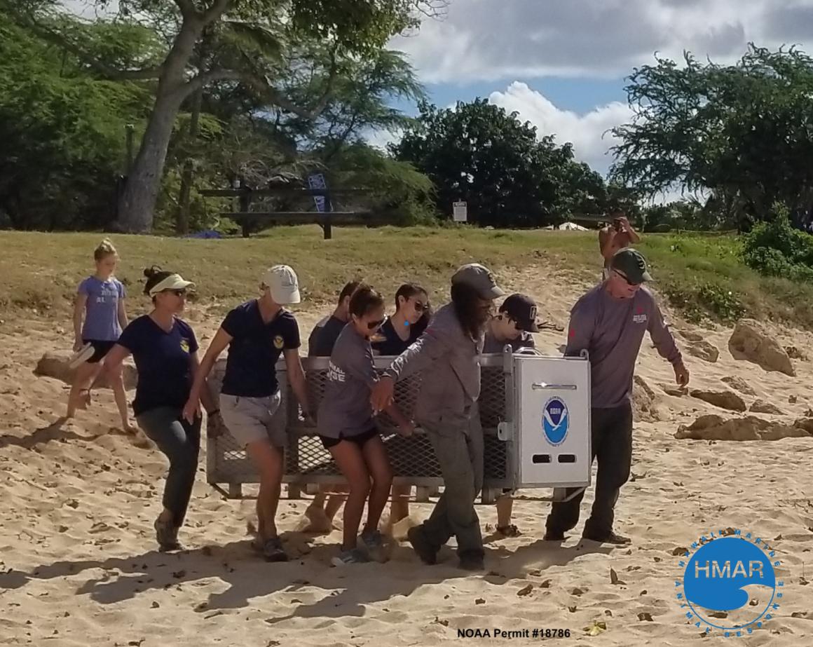 hawaii marine animal response team on the beach