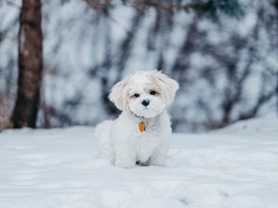 small fluffy dog in snow
