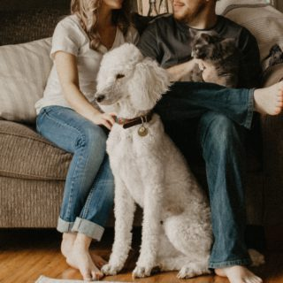 poodle and cat sitting with people near couch