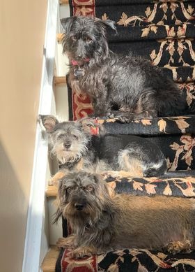 dogs sitting on stairs