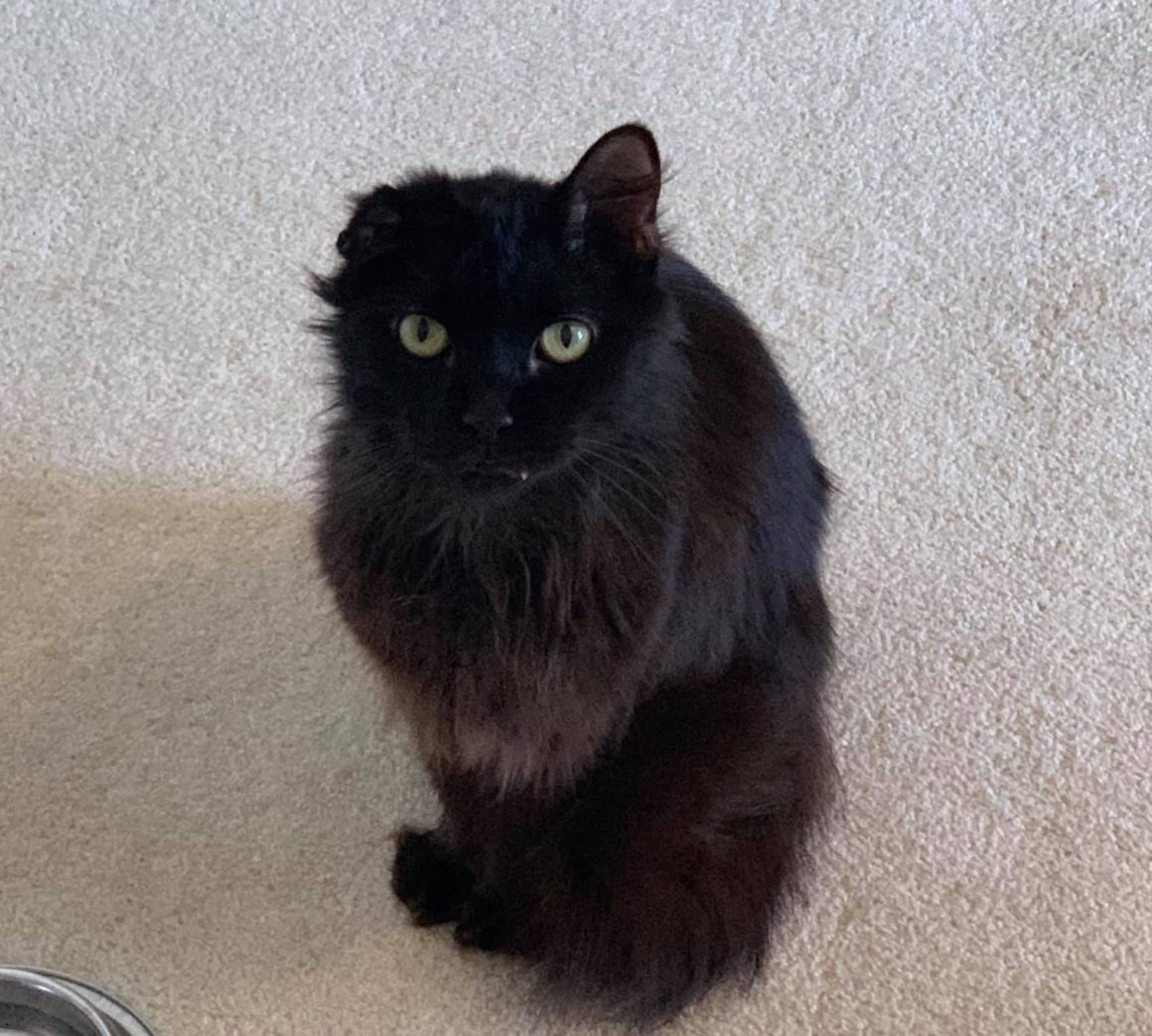 black cat with one ear