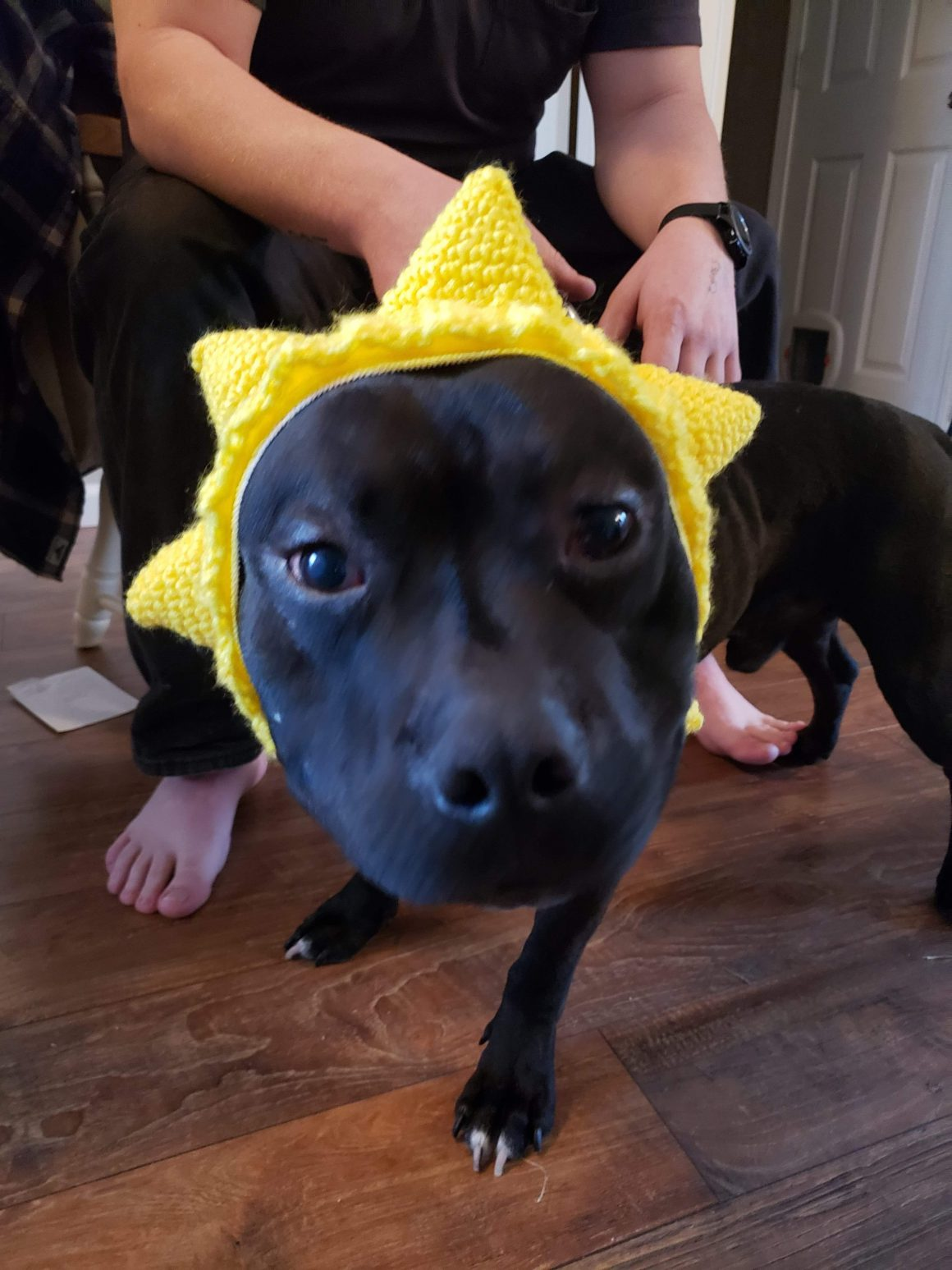 scooter the dog with a star hat