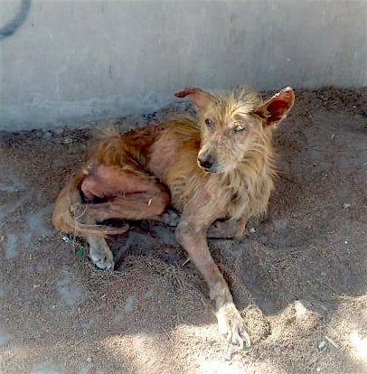 stray and neglected dog on street