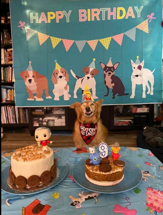 golden haired dog at birthday party
