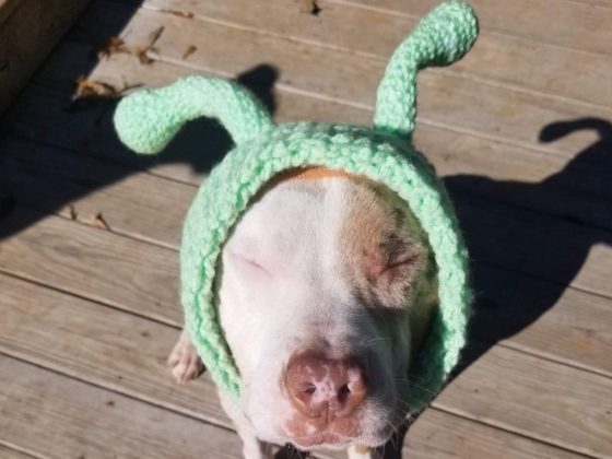 pitbull dog dressed as alien