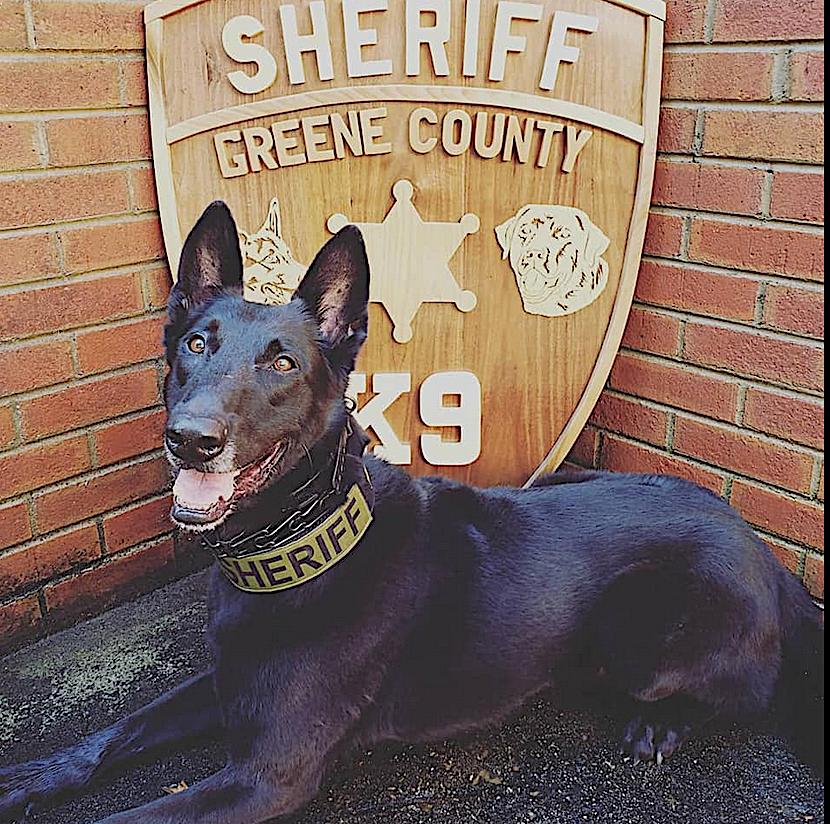 black sheriff dog
