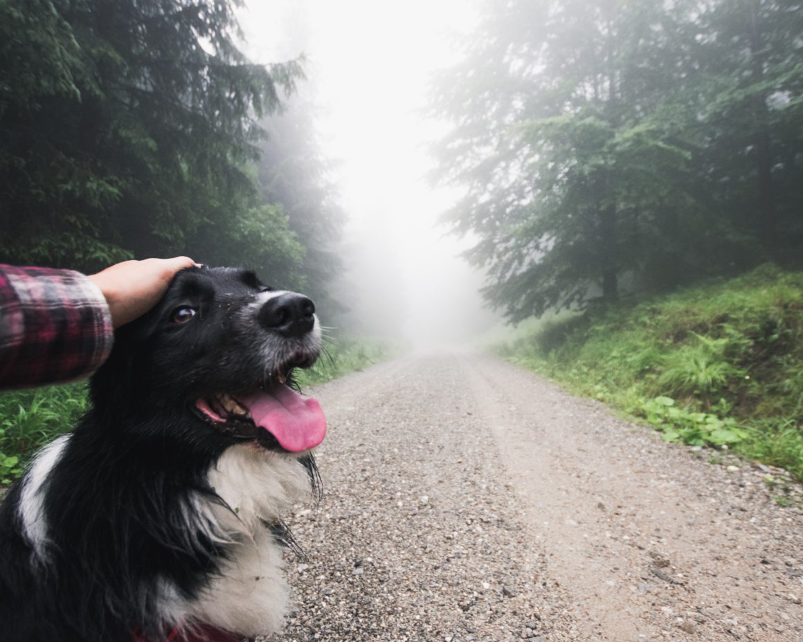 dog in front of foggy road