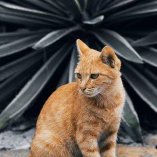orange cat in front of cactus