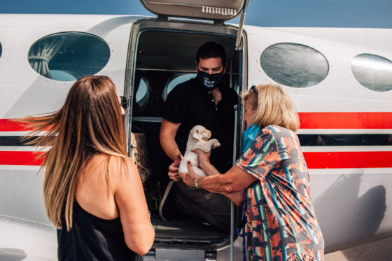 puppy being handed to two women from airplane