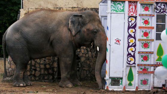 kaavan the world's loneliest elephant