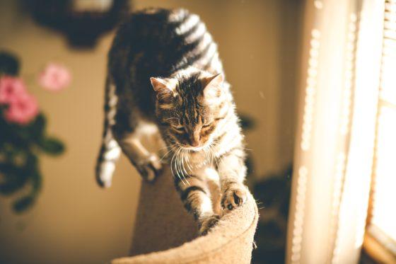 cat walking on furniture in sunlight