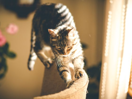 cat walking on furniture in sunlight