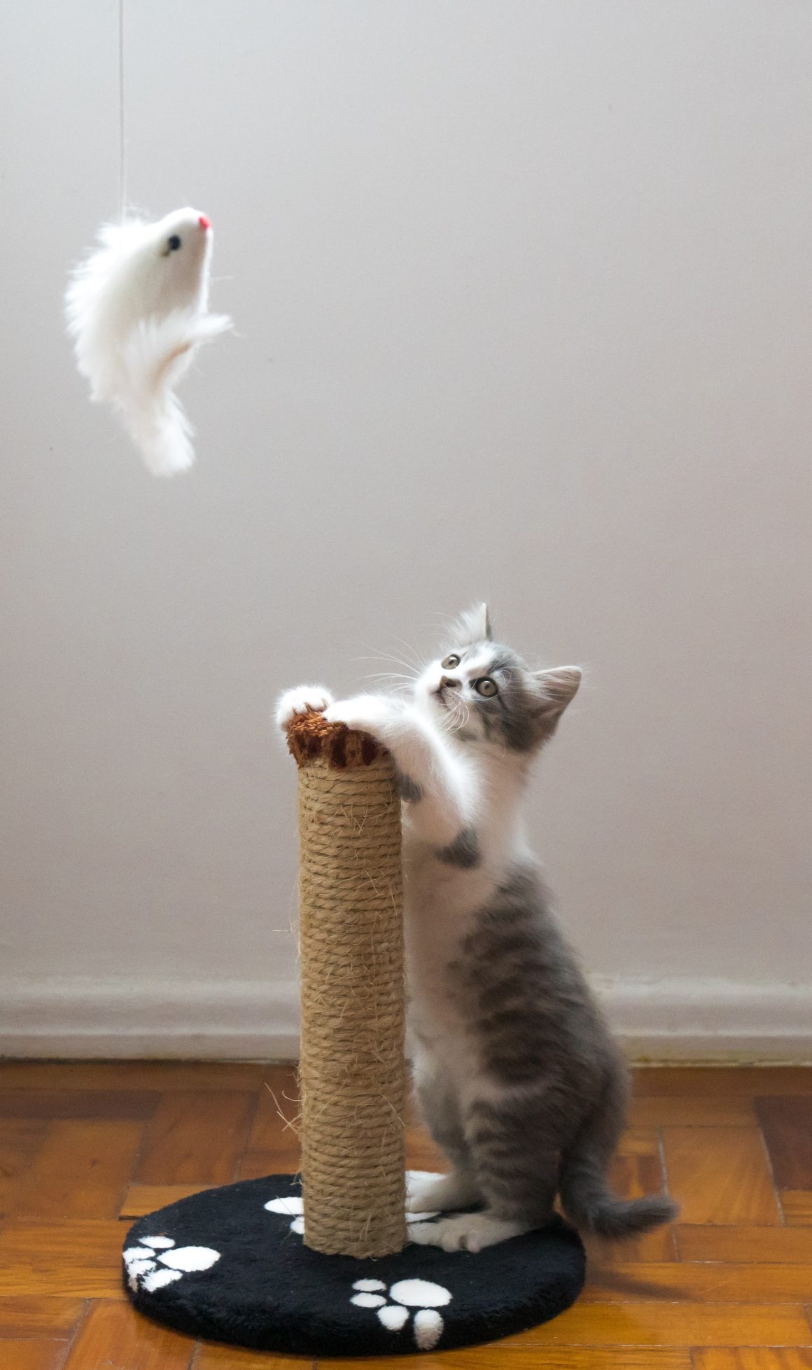cat with scratching post