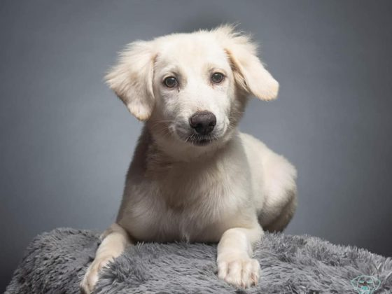 white puppy on gray background