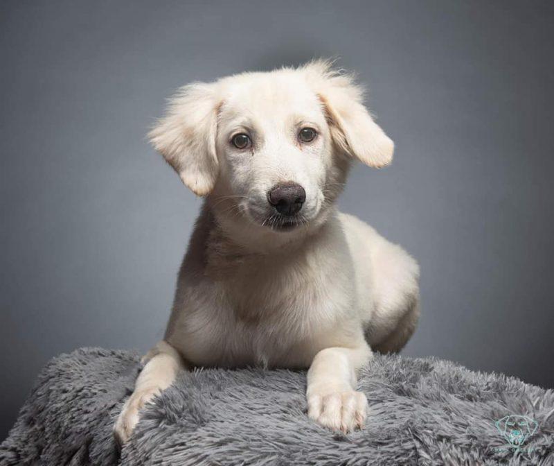 white puppy on gray background