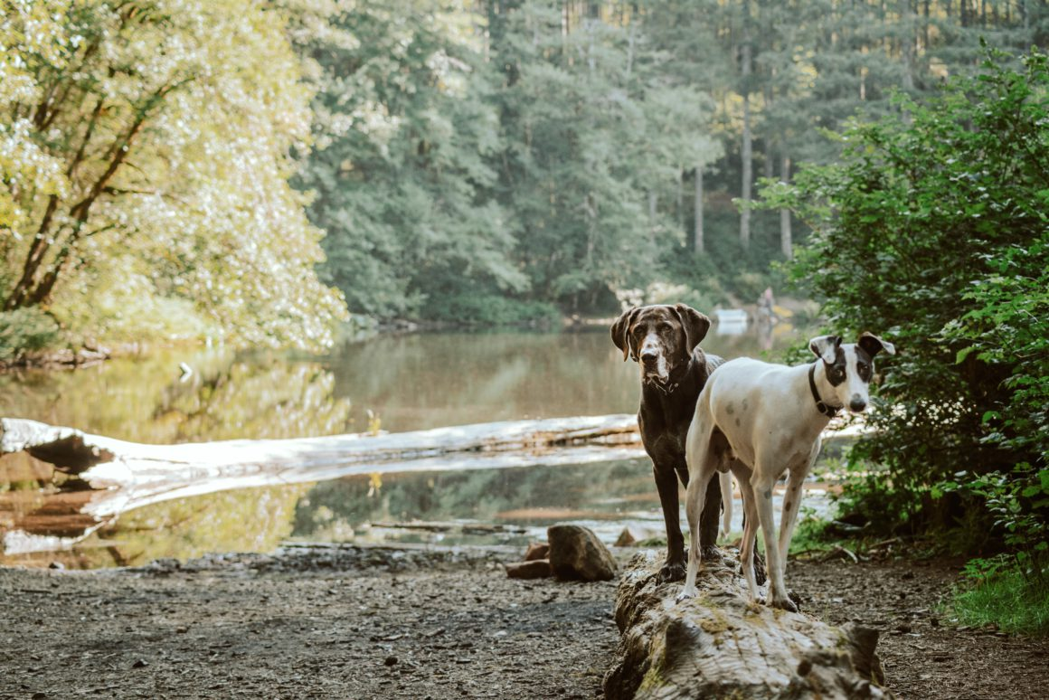 two dogs on bank of a river