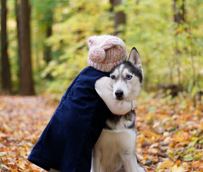 child hugging huskey