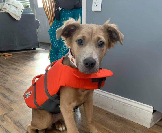 dog in lifejacket