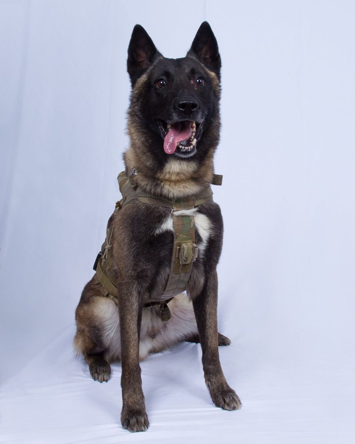 conan the military dog