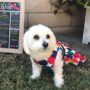 fluffy dog chloe