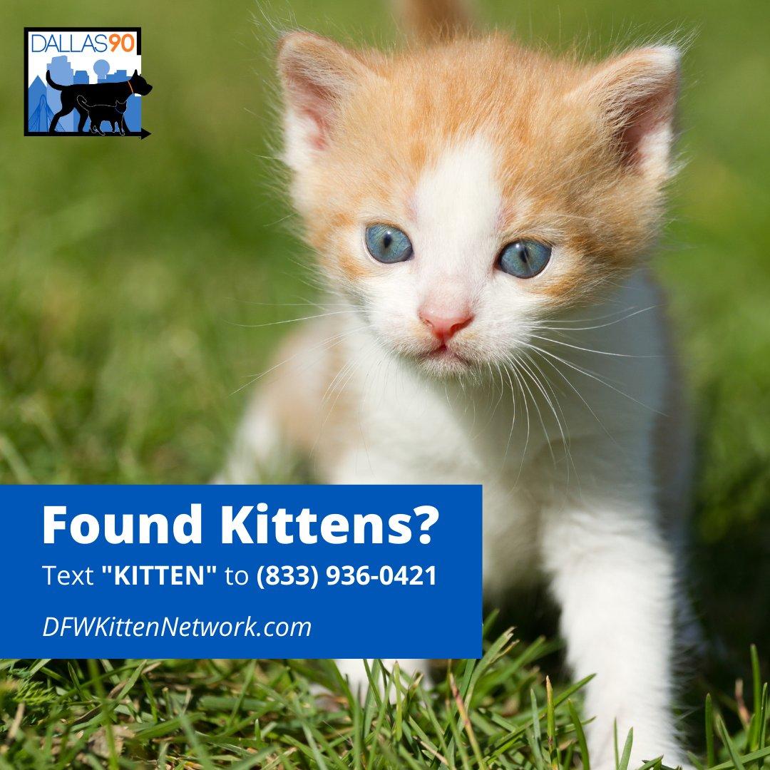 lost kittens