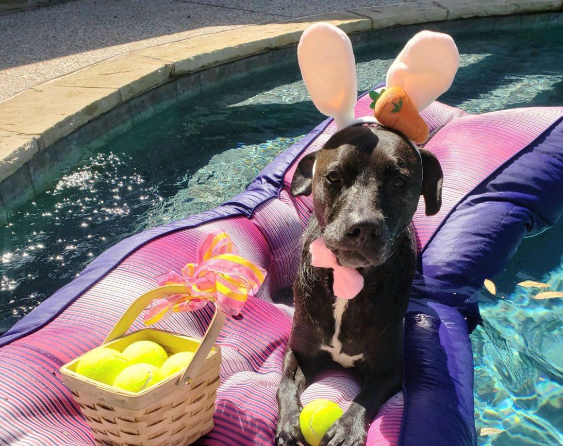 dog dressed as bunny