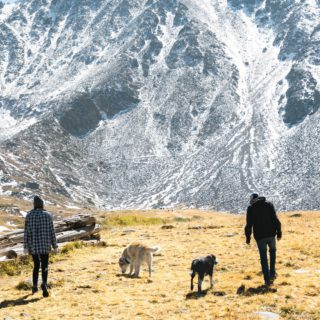 people and dogs on a mountainside