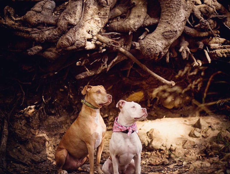dogs in front of roots
