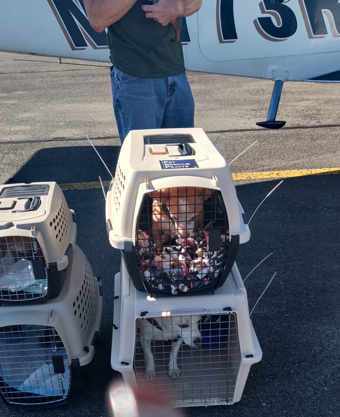 dogs in transport crates