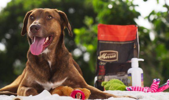 dog and merrick dog food