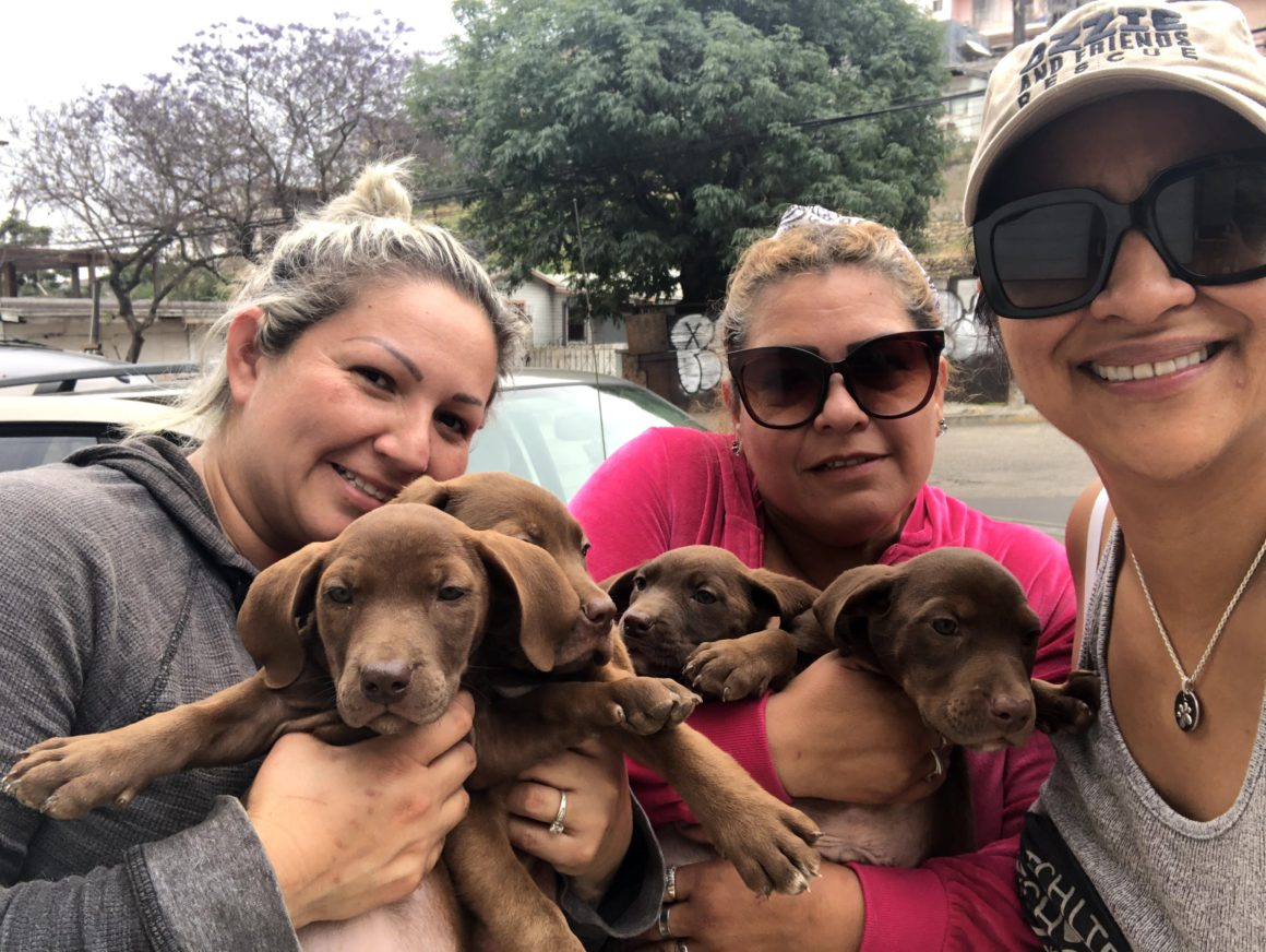 women with puppies