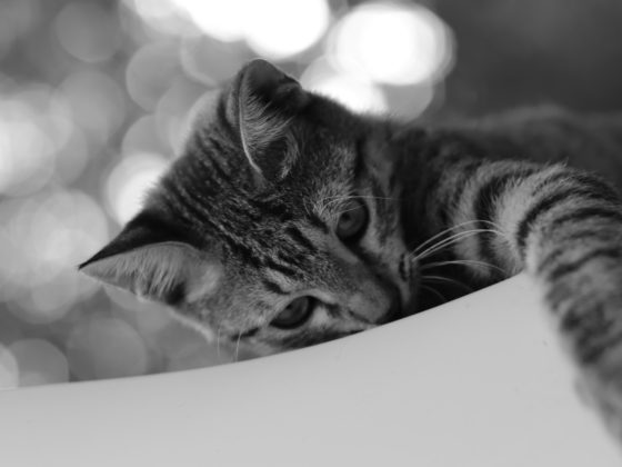 cat reaching in black and white